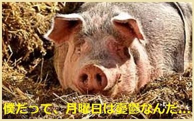 憂鬱な月曜日の豚