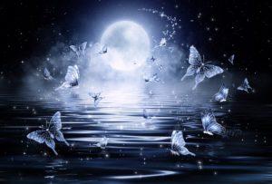 ルナシー月と蝶
