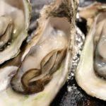 貝毒とは?原因は?カキ.あさりなどの二枚貝、GWの潮干狩りは注意!