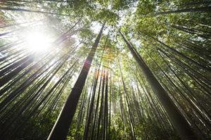 竹 かぐや姫の物語
