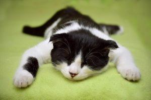 猫凪のお暇