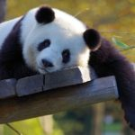 シロクロパンダ|あらすじと視聴率予想!正解もチェック・2020冬ドラマ1月